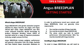 Angus BREEDPLAN Getting Started_NEWCROPV4