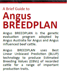 Intro to Angus BREEDPLAN