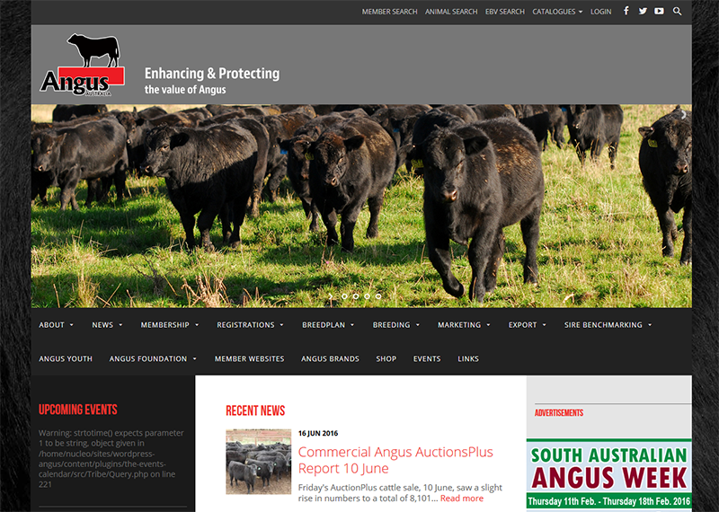 Angus Australia website NEW