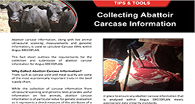 Collecting Abattoir Carcase  Information