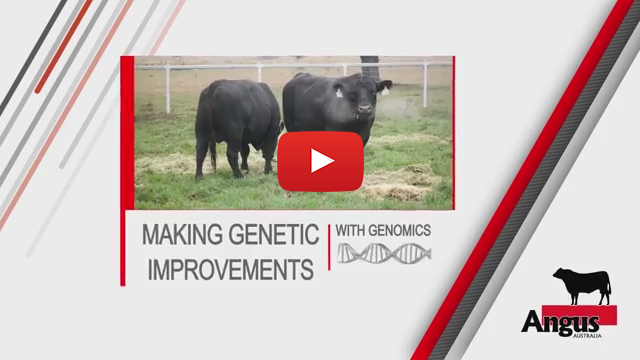 Making Genetic Improvements Youtube