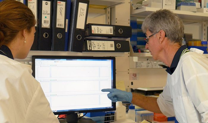 DNA testing at UQ's Animal Genetics Laboratory
