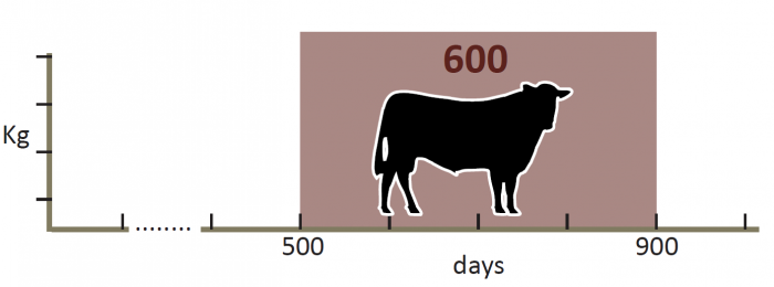 600_day_weight