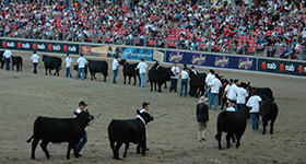 2019 Angus Feature Shows