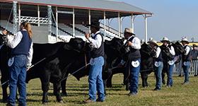 2019 Angus Feature Show DRAFT Timetable