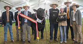 2018 Adelaide Show - Angus continue Royal Roll