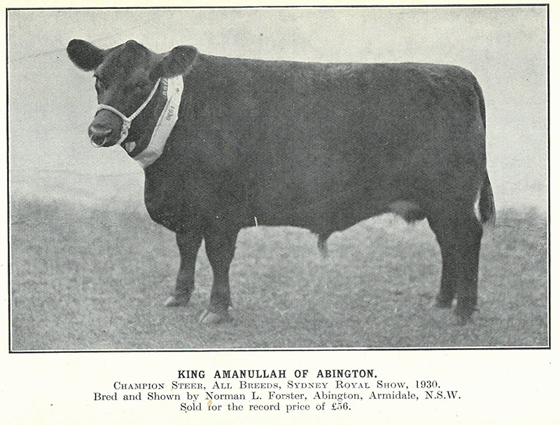 Published by the Aberdeen-Angus Herd Book Society of Australia, March 1931