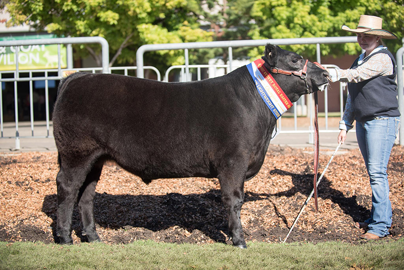 2017 Champion Lightweight Open Steer and Carcase exhibited by Travis Worth and bred by Greg and Leonie Ball