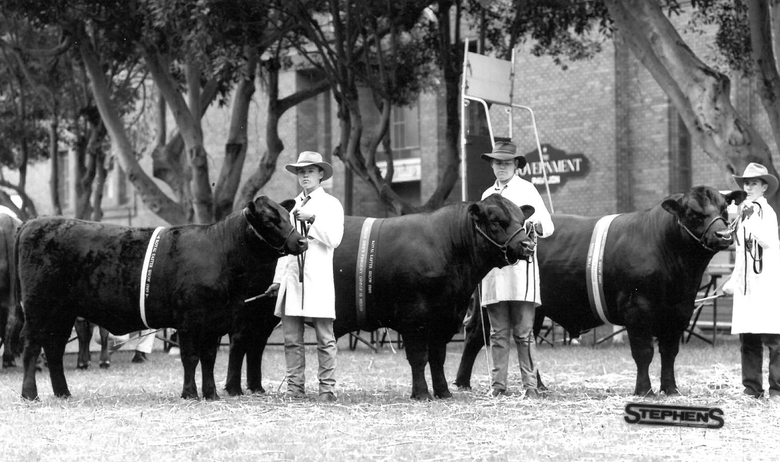 Farrer Students in the Sire Progeny Group Sydney Royal 1989