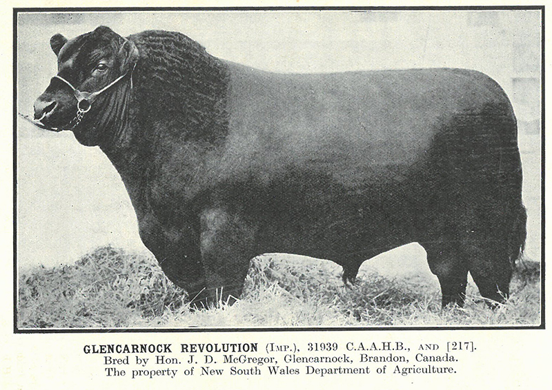 Reserve Champion Aberdeen-Angus Bull, Sydney 1930  Herd Book of Australia, Volume 4 - Published by the Aberdeen-Angus Herd Book  Society of Australia, March 1934
