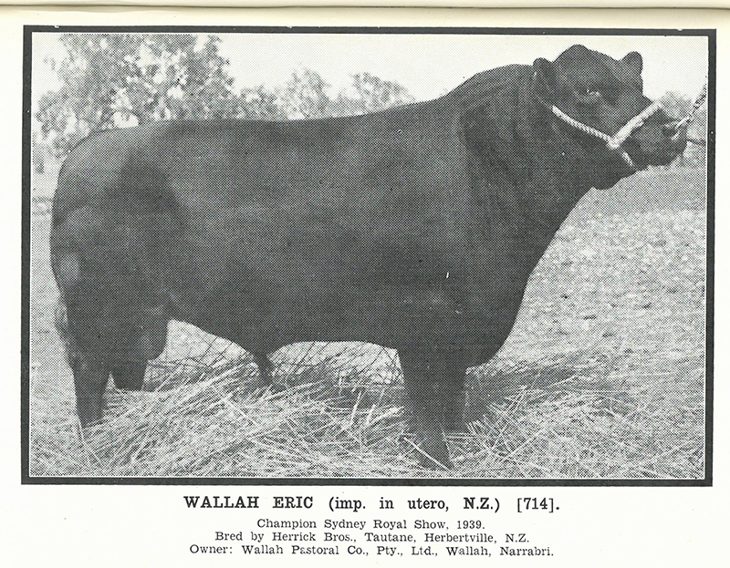 Herd Book of Australia, Volume 8: Published by the Aberdeen-Angus Society of Australia, June 1940