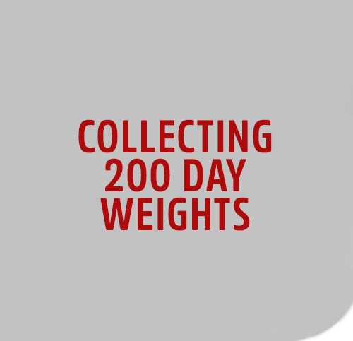 COLLECT-200