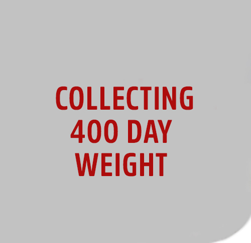 COLLECT-400