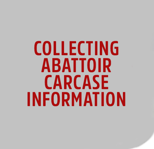 COLLECT-ABB