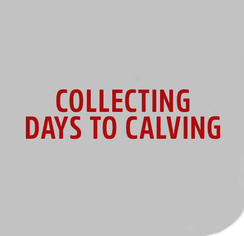 cOLLECTING-DAYS-TO-CALVING