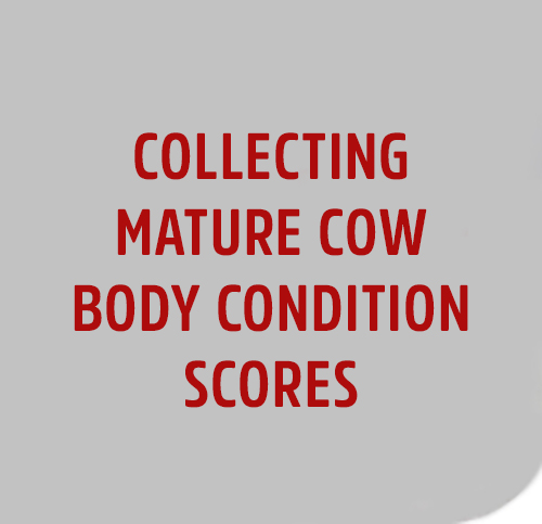 Collecting-BODY-CODITIONS