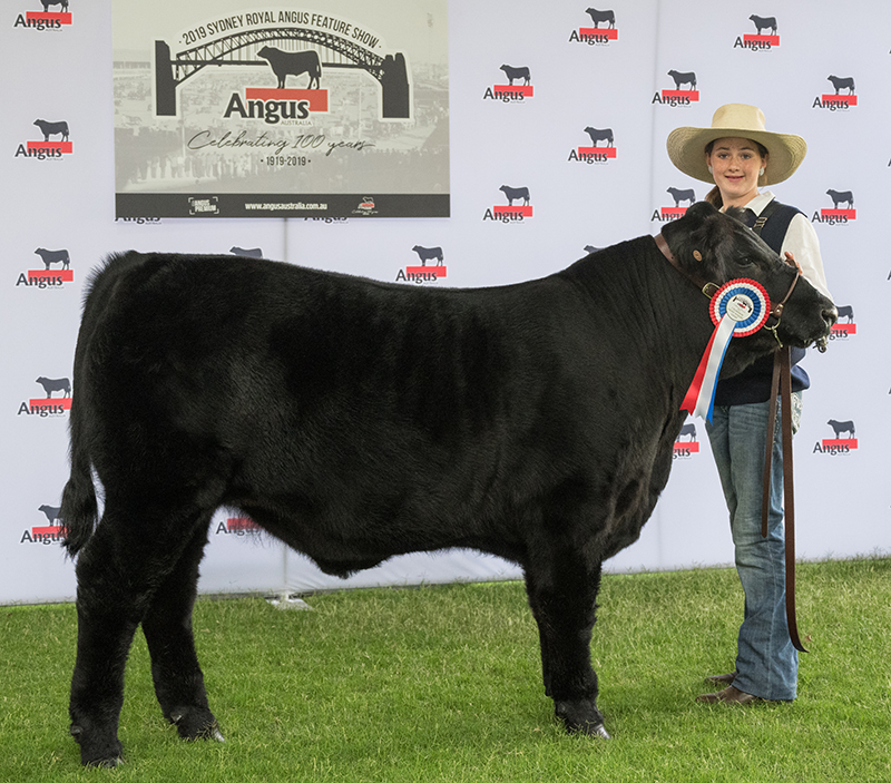 Lightweight Champion Steer Andre  exhibited by Justin Richards bred by North Bullagreen