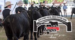 2019 Sydney Royal Easter Show Angus Feature Show