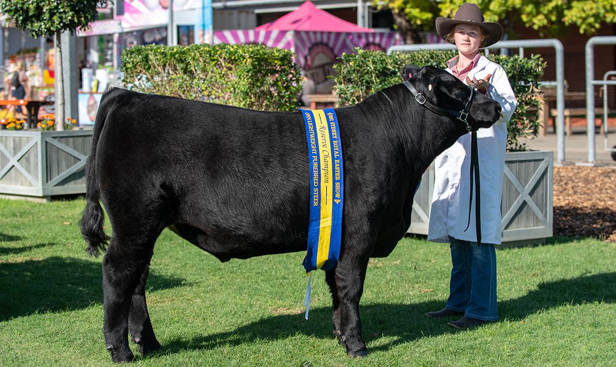 Reserve Champion Lightweight Steer