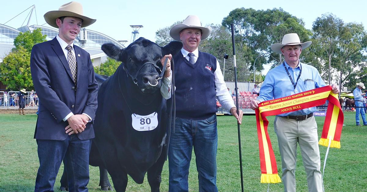 Reserve Senior Champion Bull - Killain Rainman P1PV