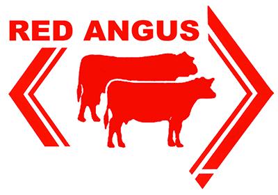 Red Angus - Dinner partner
