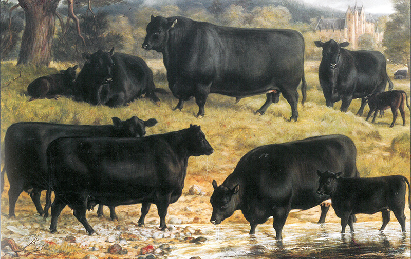 Portrait by David Steel of the renowned Ballindalloch herd of Aberdeen-Angus cattle (1884)