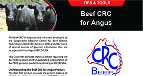 Beef CRC for Angus