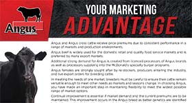 Your Marketing Advantage