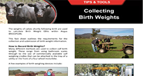 Collecting Birth Weights