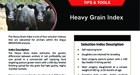 Heavy Grain Index