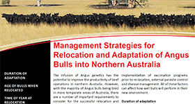 Management Strategies for Relocation and Adaption of Angus Bulls into Northern Australia