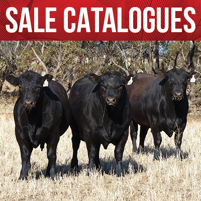 View Sale Catalogues