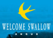 Welcome Swallow Angus