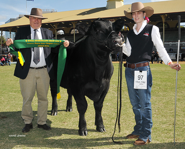 Reserve Junior Champion Bull