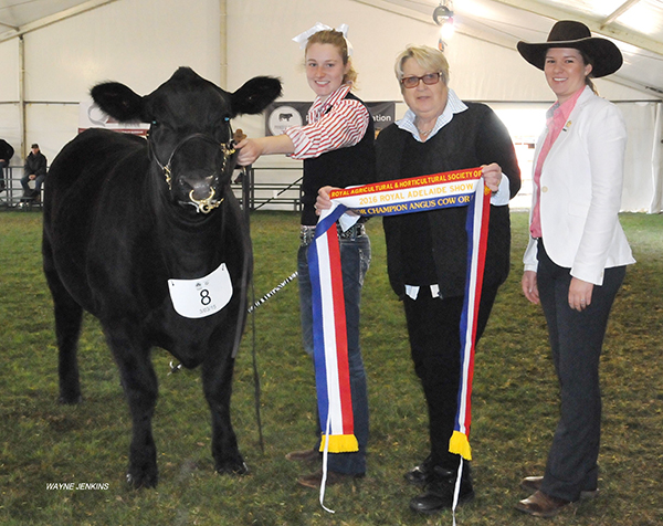 Junior Champion Heifer