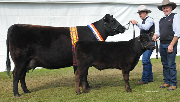 Senior & Grand Champion Female