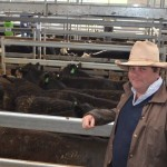 Around the saleyards September 21