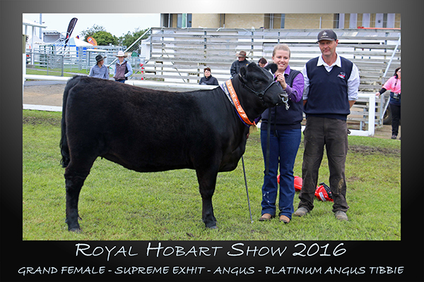Grand Female - Supreme Exhibit - Angus - Platinum Angus Tibbie