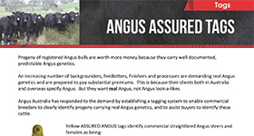 Angus Tag Order Form