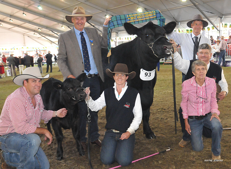 Grand Champion Angus Exhibit