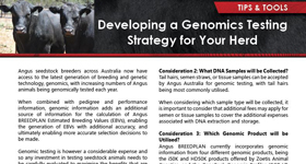 Developing a Genomics Testing Strategy for Your Herd
