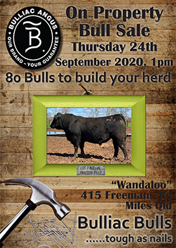 Bulliac_Bull_Sale_Catalogue_2020-1-TILE