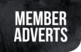 GD-Folio_member-adverts-Icon