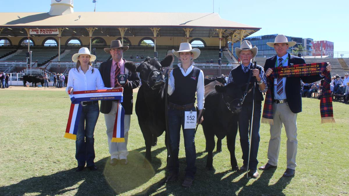 Bowenfels Jedda 17 held by Chloe Gould while exhibitor Glen Perrett holds her calf and sashed by Jodi Peake, Peake Angus, Barraba, NSW with Brian Kennedy, Elders and judge Andrew Chapman, Calliope. Image courtesy of the Queensland Country Life