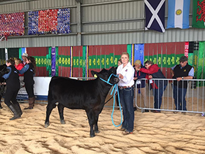 Jasmin Ramage in the heifer classes