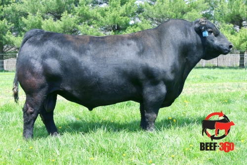 4x A grade Embryos Donated by Dalwhinnie Angus - Kennys Creek Rosebud x LD Capitalist 316