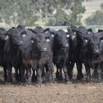 The Reach of the Angus Sire Benchmarking Program