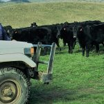 An Angus switch pays off for one Wallabadah grazier