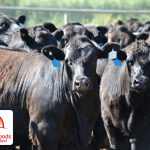 The customer, the Angus beef, the Angus supplier