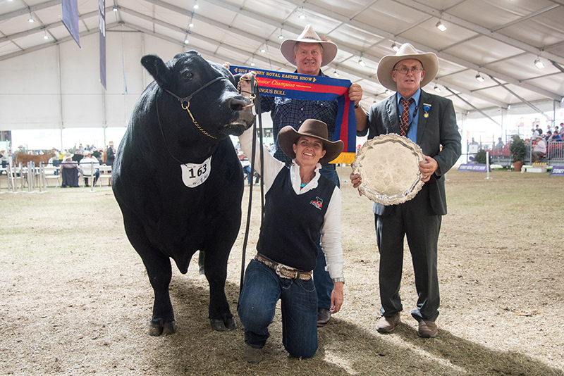 Sydney Royal - Senior Champion Bull